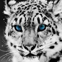 ADMINBILL's INTEL Source Revealed! It's Wolfy! He's Baaaaack! Avatar?id=1592635&m=75&t=1452565423