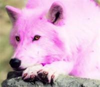WOLFY CAN'T TAKE A JOKE         Avatar?id=1596423&m=75&t=1456417087